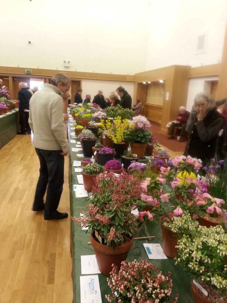 EAST LANCASHIRE AGS SHOW 21st MARCH 2015 (5/6)