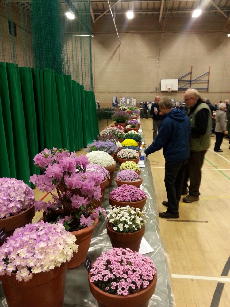 AGS/SRGC SHOW HEXHAM MARCH 28th 2015 (1/6)