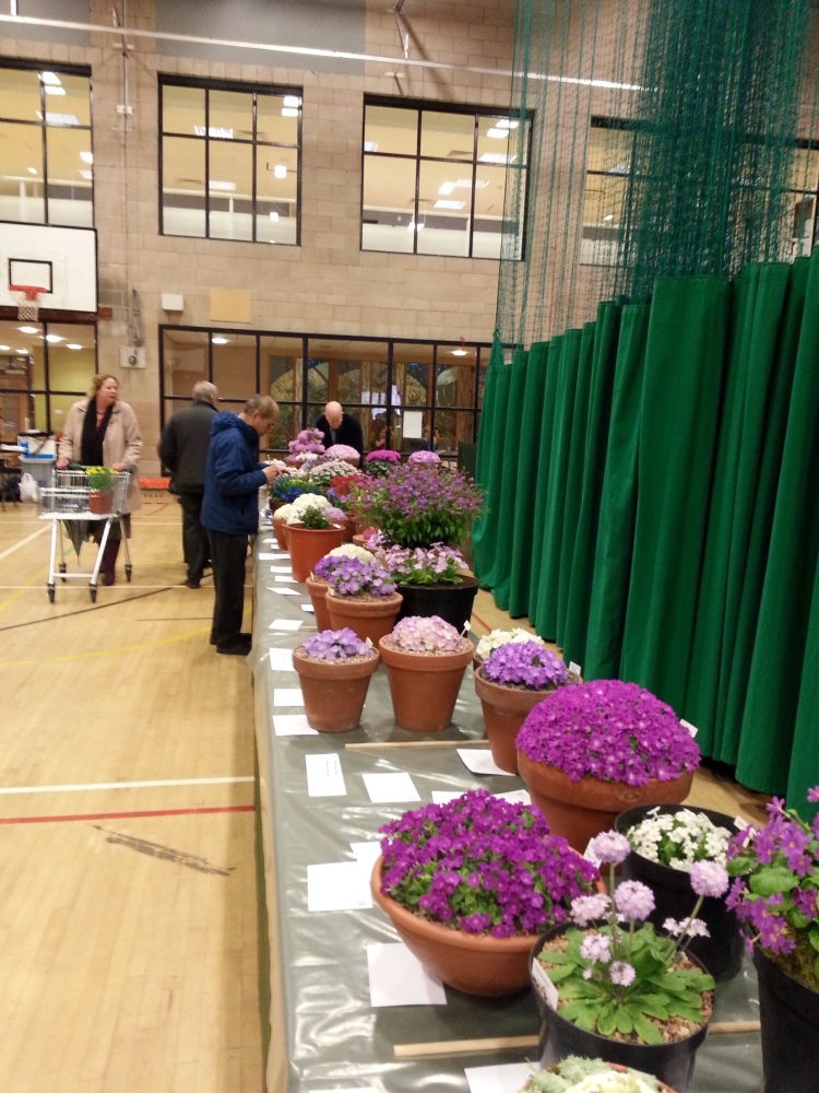 AGS/SRGC SHOW HEXHAM MARCH 28th 2015 (2/6)