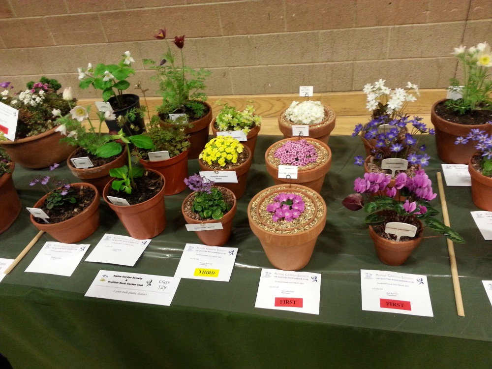 AGS/SRGC SHOW HEXHAM MARCH 28th 2015 (3/6)