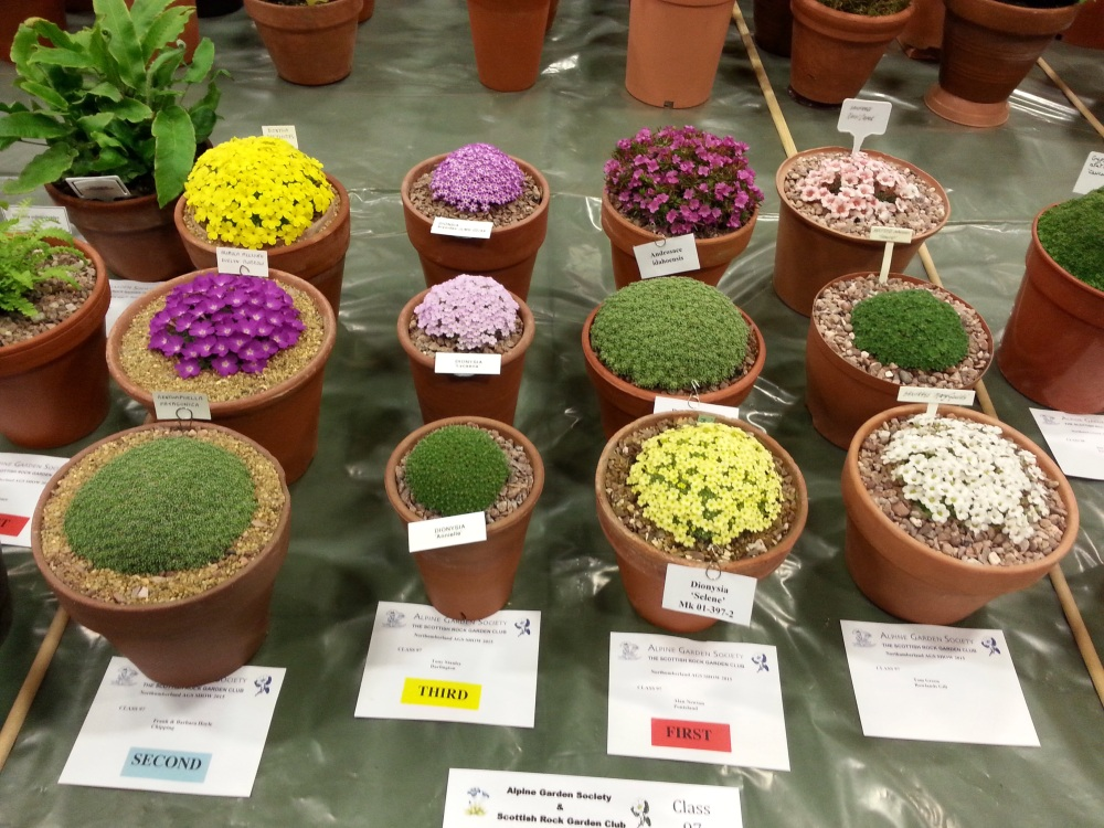 AGS/SRGC SHOW HEXHAM MARCH 28th 2015 (4/6)