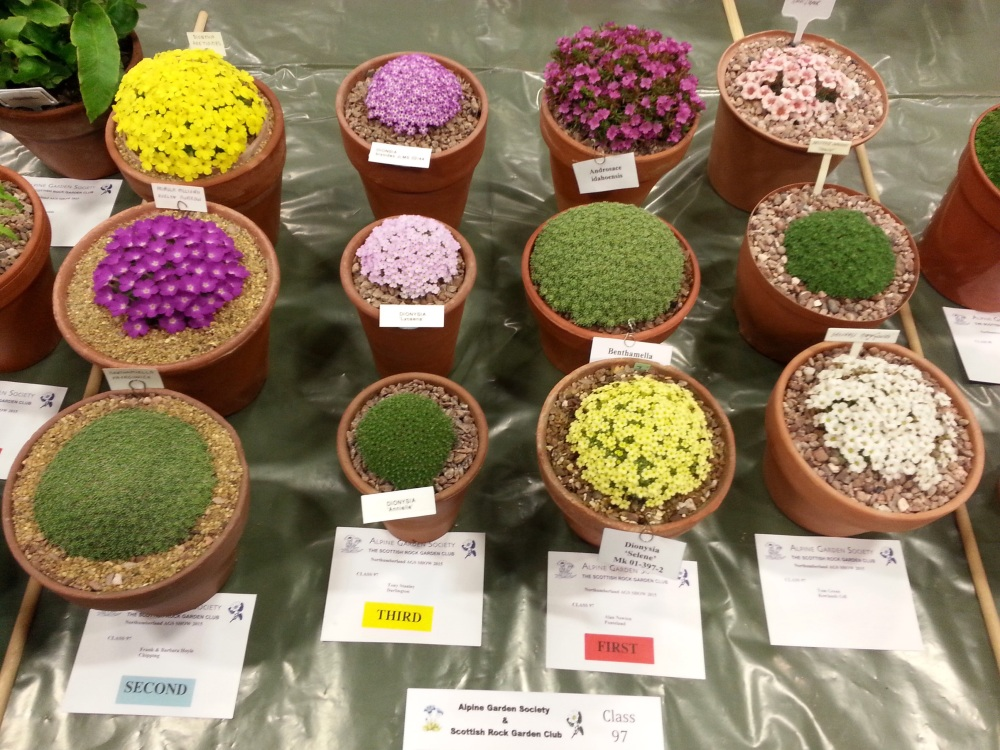 AGS/SRGC SHOW HEXHAM MARCH 28th 2015 (5/6)