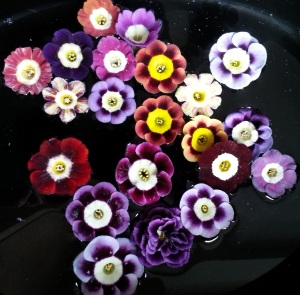 A few more Auriculas