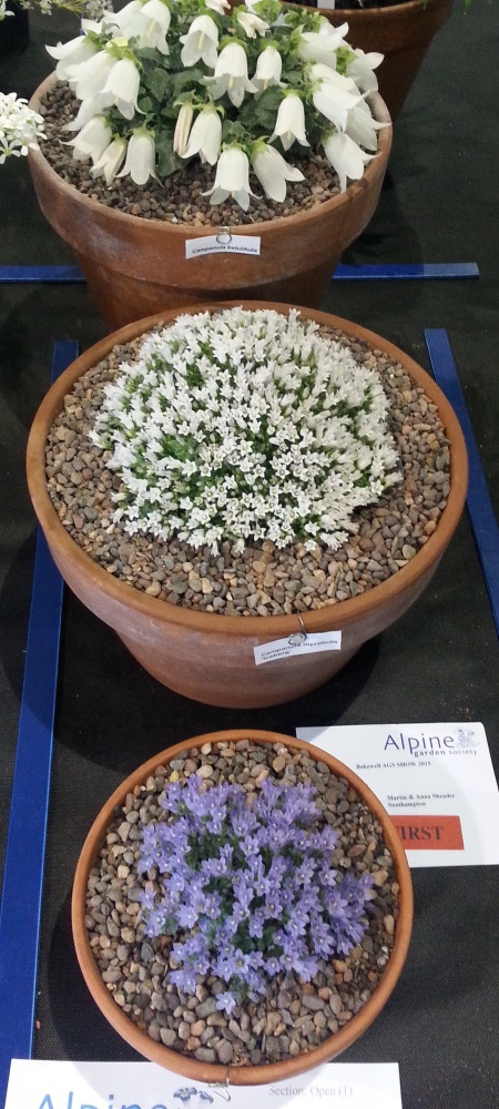 AGS SHOW BAKEWELL SUNDAY 14th JUNE (6/6)