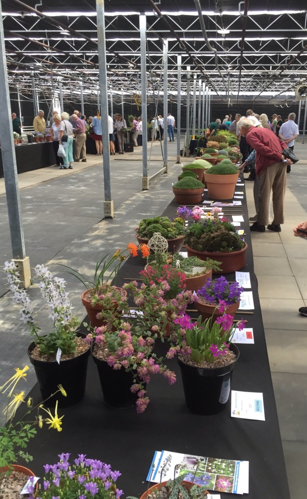 PERSHORE AGS SHOW SAT. 11th JULY 2015 (2/6)
