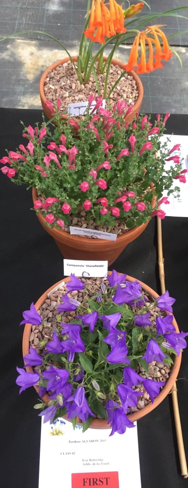 PERSHORE AGS SHOW SAT. 11th JULY 2015 (3/6)